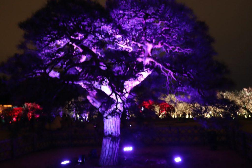 チームラボ水戸偕楽園の光の祭